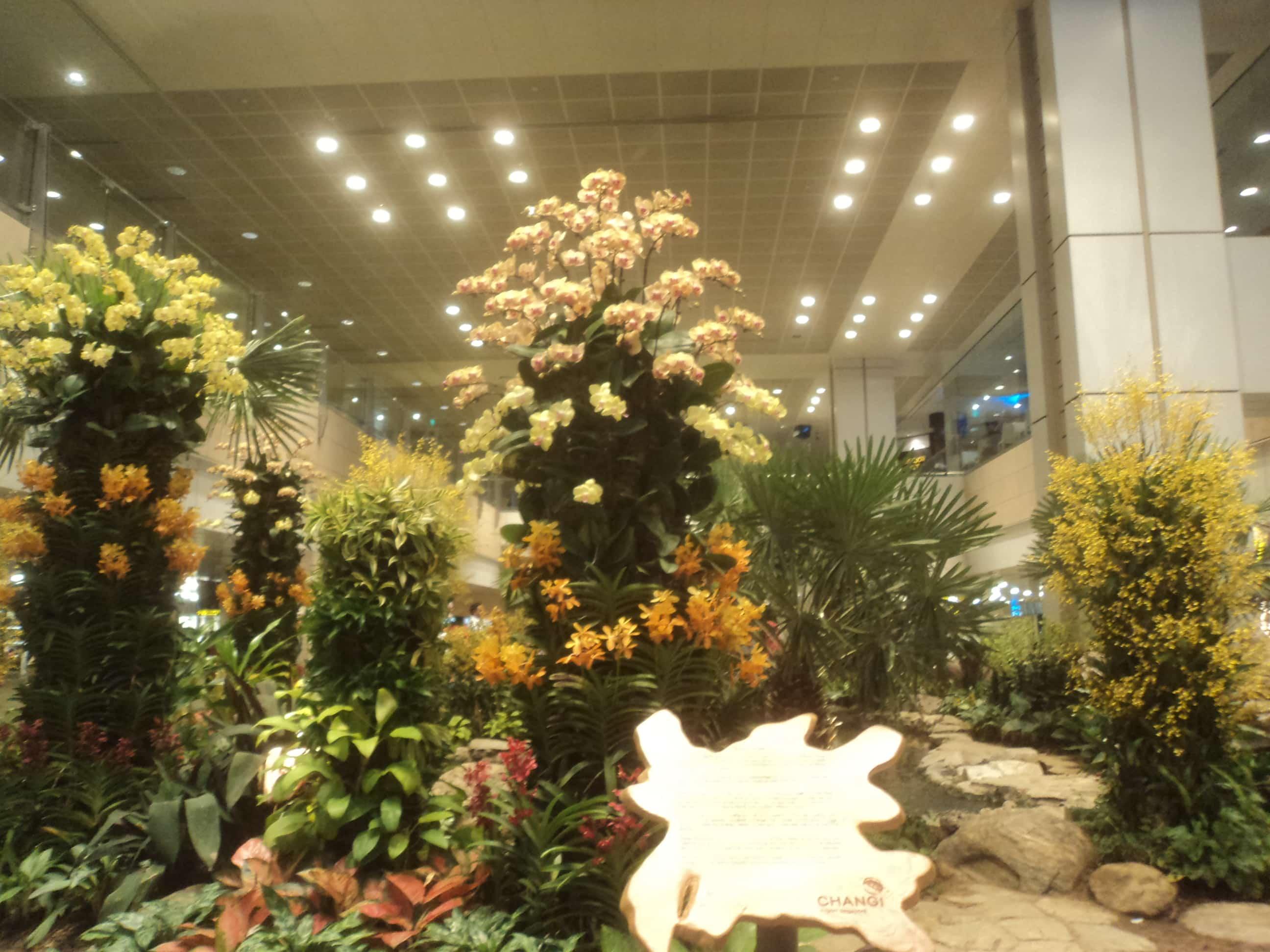 Jardin Botanico , en el aeropuerto de Singapur .