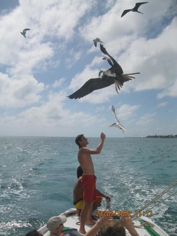 Alimentando a las gaviotas , en Belize .