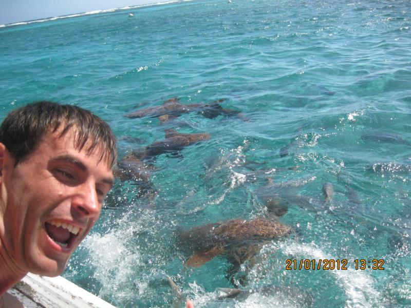 Tortugas gigantes , en Belize .