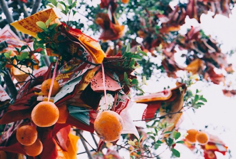 Wishing Tree Photography: joybot