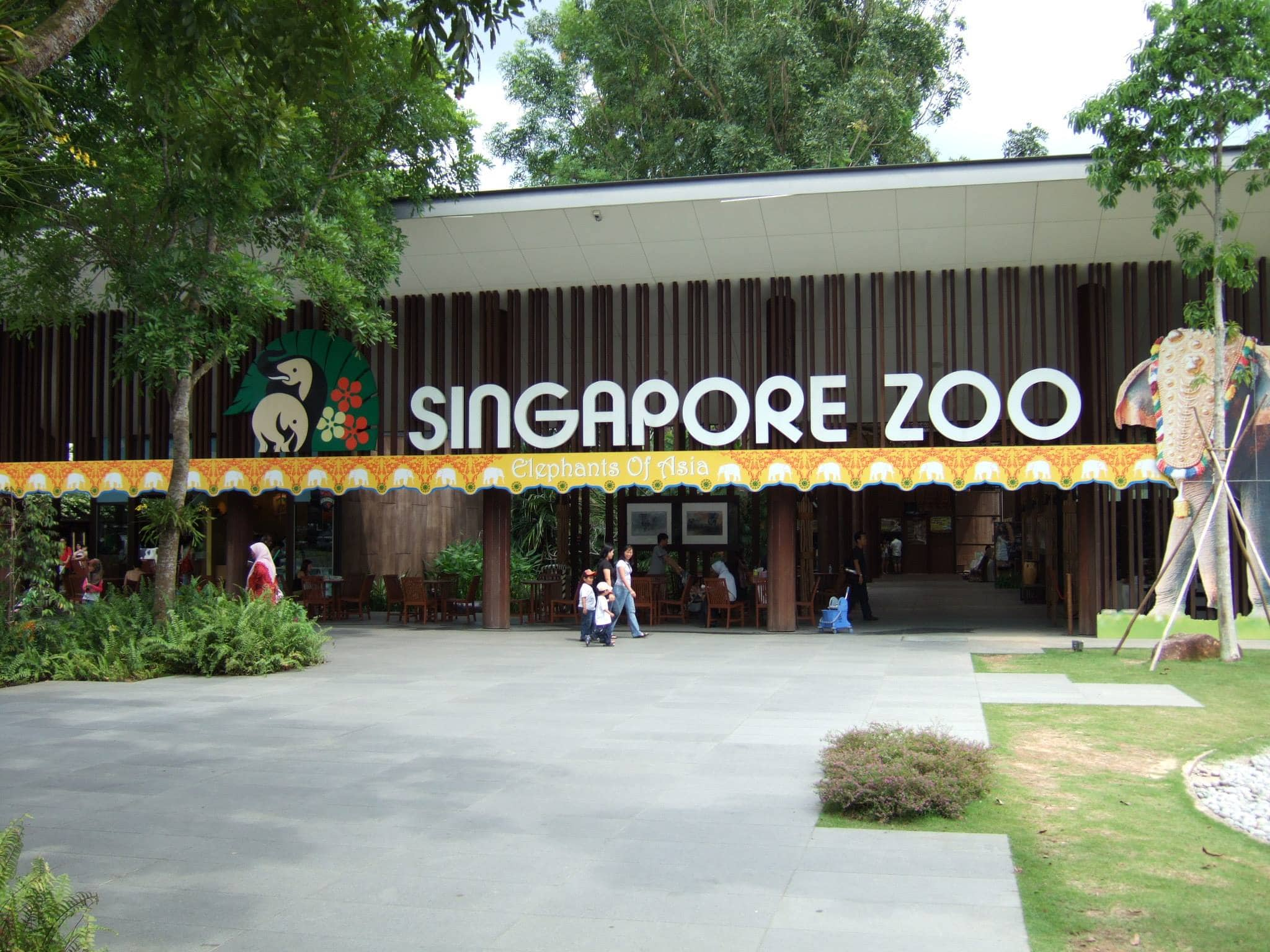 Travel Singapore. Visit the zoo.