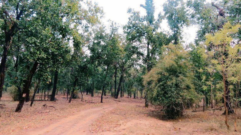 wildlife destinations in India.