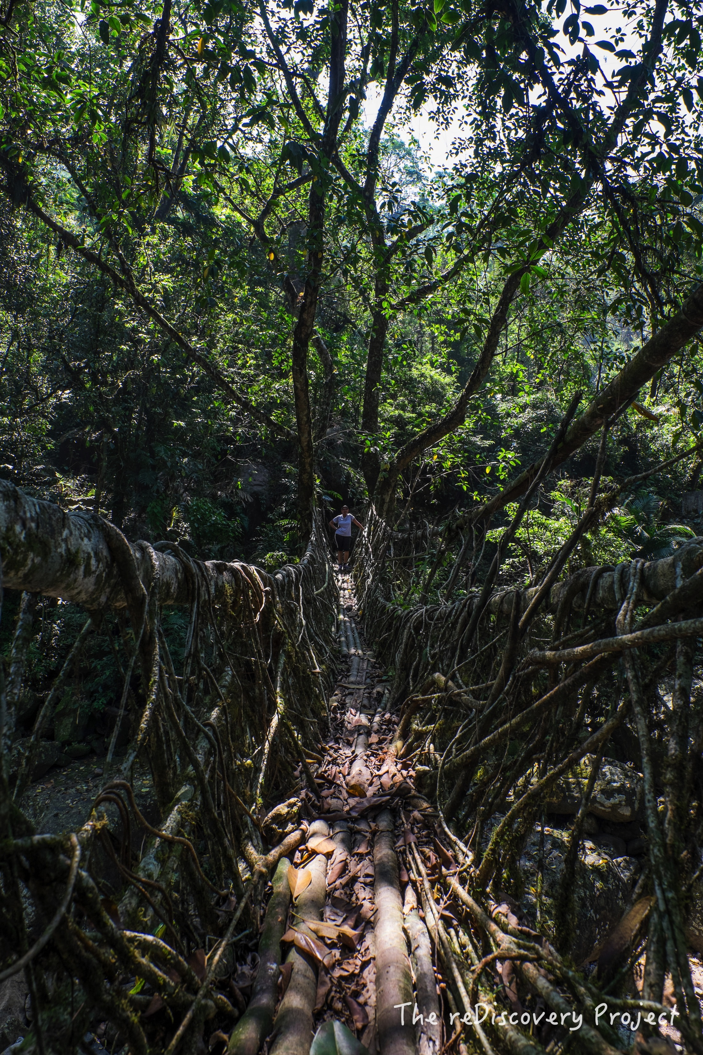 Living Root Bridges.