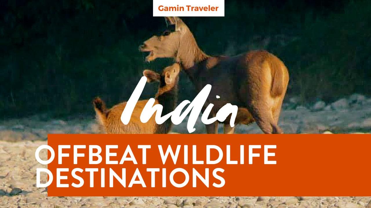 Offbeat Wildlife Destinations in India - Featured